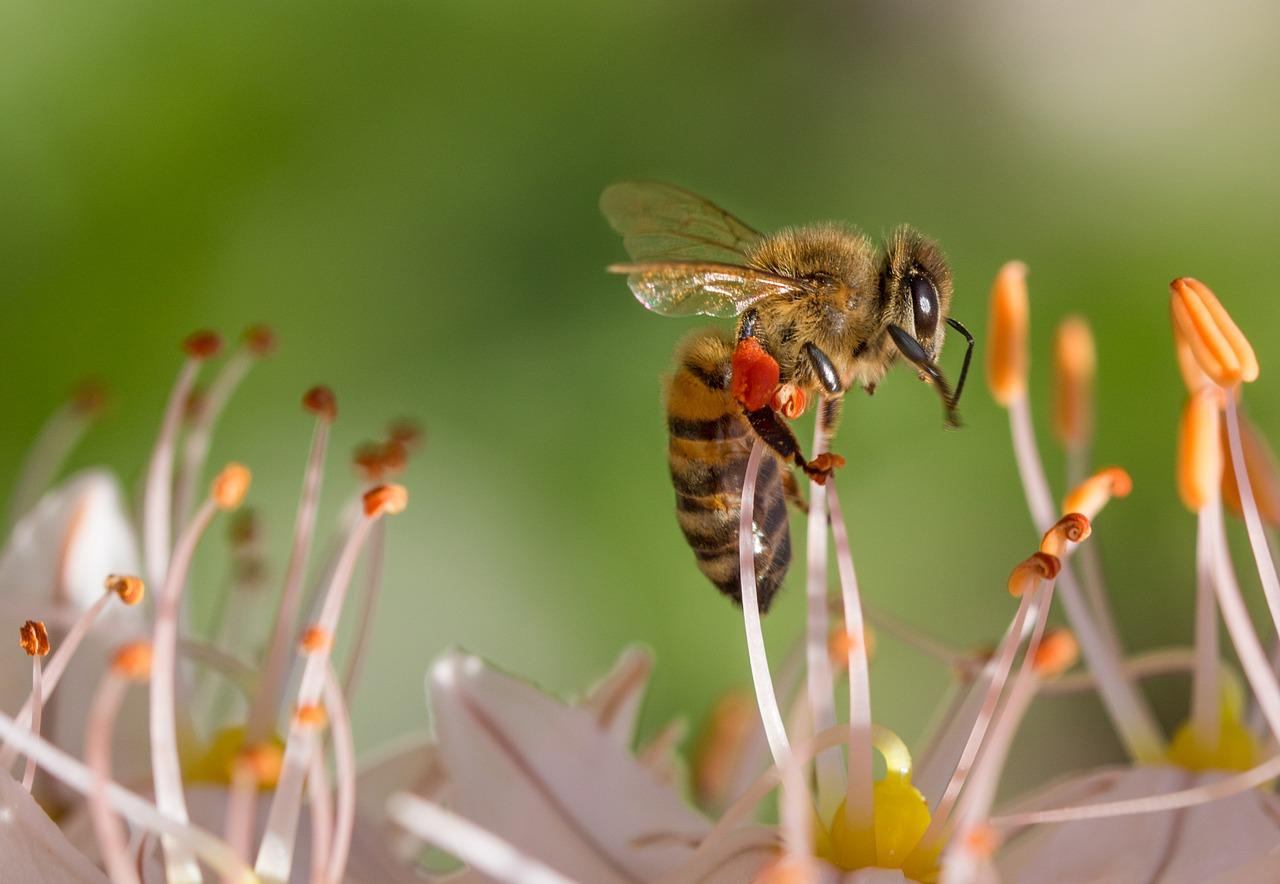 tueurs d'abeilles
